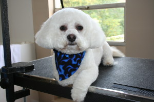 Dog Grooming in Montgomery County